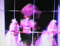 1: Maltz behind bars