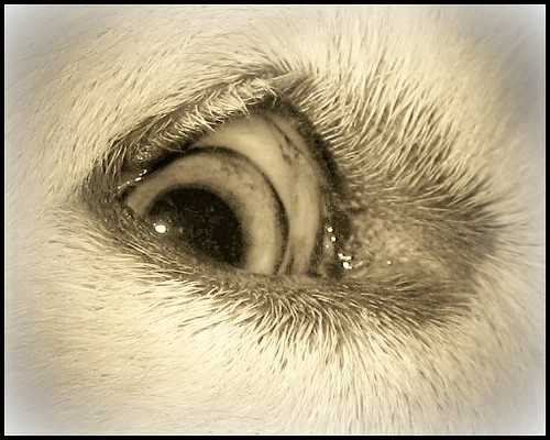 sophie eye