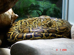 DSC00093 (cimbombom08) Tags: deutschland zoo tiere stuttgart sony dsc schlange badcannstatt phyton wilhelma