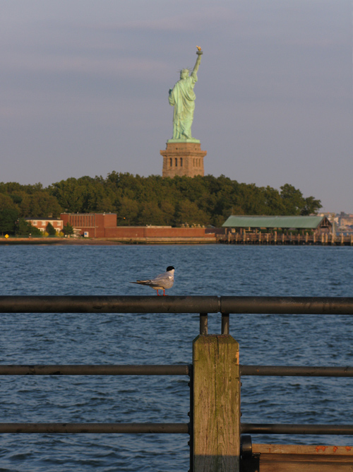 bird on railing with the Statue of Liberty, NYC