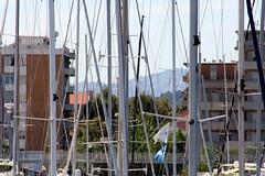 foresta (theSPOT) Tags: sea italy sun canon italia mare estate rimini porto sole seaport bosco foresta eos350