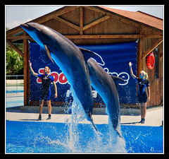Against the dolphins fishing (Lonelywolphoto / Dan Enrietti) Tags: italy water europa europe italia dolphins tor hdr lazio zoomarine delfini torvajanica sonyalphadslr sonya700 sonyalphaitalia