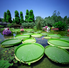 It's almost paradise? (podgypots) Tags: sky flower colour film zoo waterlily pinhole tropical hardy biwako