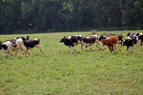 stampede by John Donges, on Flickr