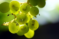 Born in the grapes... (look inside the grapes) (Rufra (Francesco Russotto)) Tags: canon uca grape francesco embrion kartpostal aplusphoto goldenphotographer ysplix natureselegantshots expressofpro rufra russotto internationalflickrawards