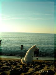Summer memories #1