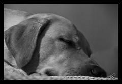 Homer dormido (abablat Photography) Tags: dog pet beach playa perro homer mascota