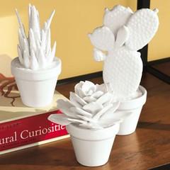 Porcelain Succulents