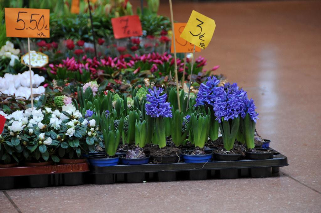 Hyacinths, azaleas & other Christmas flowers