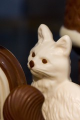 Chocolate Cat