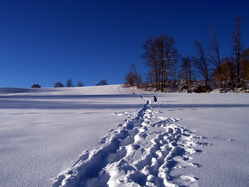 Wading in snow