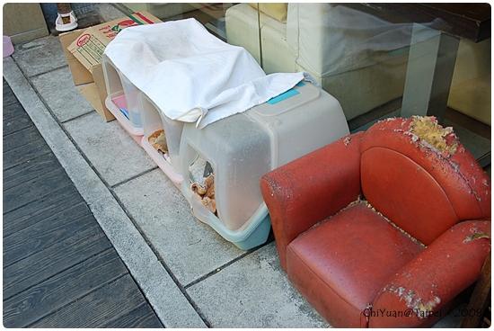 [台北]Cat。極簡咖啡-戶外前庭。睡窩