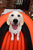 Bella is going boating!! (Sarah_85) Tags: summer cute smile goldenretriever puppy outside happy boat bella flickrlovers exploredec28th387