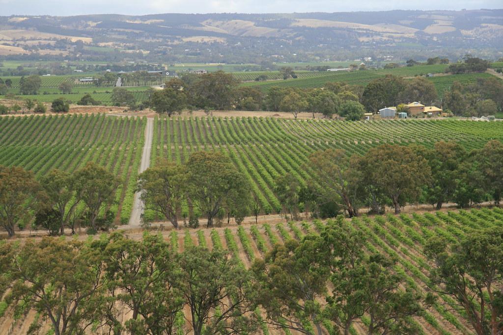 View of Mclaren Vale