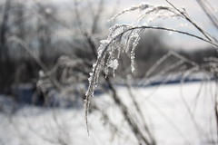 Frosty Morning (ann j p) Tags: morning winter snow ontario cold grass frost saultstemarie naturesfinest naturethroughthelens northrernontario
