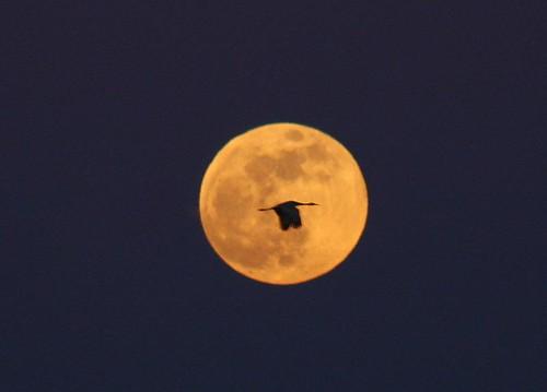Crane Reserve in Lodi, CA