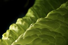 No More Edit ! (Mehrad.HM) Tags: macro green water drop lettuce edit greenlettuce glob goblet sabz     ghatreh kahoo   nomoreedit  moreedit