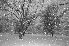 Flocons - tombe la neige