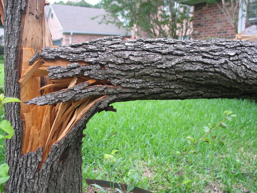 storm tree detail