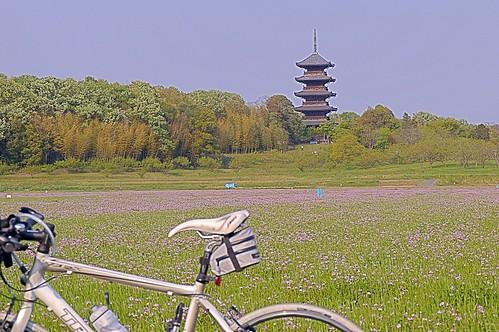 れんげ+五重塔 #2