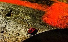 Feuerwanze (°jotha°) Tags: orange licht feuer farbe schatten beton feuerwanze jotha jothafoto jothaart