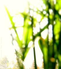 a TRaVS... (CatuRRiNa d-.-b) Tags: abstract verde green art project arbol photography three photo nikon foto arboles arte 365 abstracto proyecto fotografa