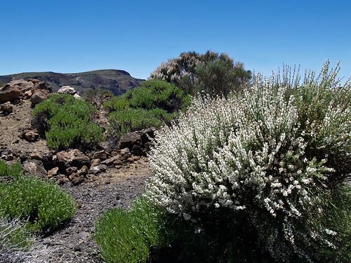Primavera en el Parque Nacional del Teide