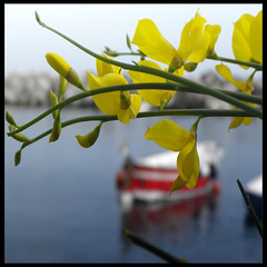 Una (G)inestra sul mare (s@brina) Tags: sea barca mare colore finestra procida ginestra