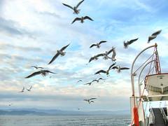 Eskihisar-735 (gezilerden) Tags: ferry vapur kadky mart enstantane eskihisar arabalvapur