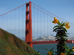 Golden Gate Bridge with Wildflower (scrunchy17) Tags: sanfrancisco orange flower nature canon landscape powershot goldengatebridge bayarea wildflower marinheadlands blueribbonwinner s5is canons5 excapture