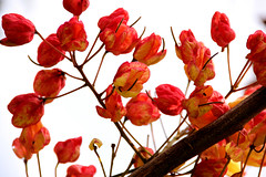 littleflowerssm