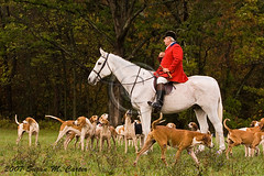 Foxhunting (smcarterphotos) Tags: autumn horses horse dog dogs cheval countryside hound fox hunter top20horsepix rider pferd equestrian foxhunt equine hunt foxhunting hounds huntsman foxhound foxhounds
