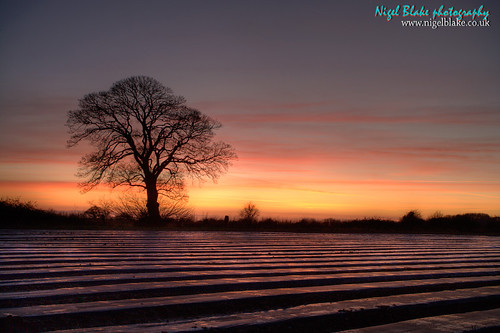 Bare winter tree at Kings Lynn