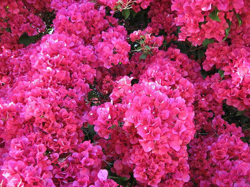 Sherman-Oaks-plants-4