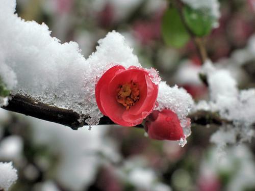 April snow 3135