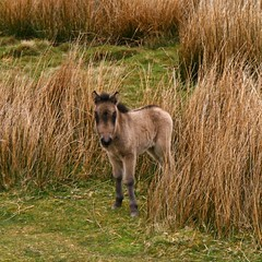 Knee High to a Grasshopper (RoystonVasey) Tags: uk wild england digital canon square eos rebel kiss britain united small great young sigma kingdom x pony cumbria gb fell foal palabra 1770mm xti 400d