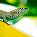 Posing Lizard by Rygood