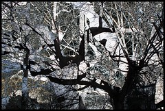 Abstract Trees B&W (Tim Noonan) Tags: trees blackandwhite abstract art collage digital photoshop effects diptych manipulation mosca artisticexpression darklands fineartphotos infinestyle amazingamateur stealingshadows awardtree daarklands
