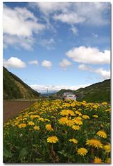 Dandelion Field (B*_J) Tags: sky cloud flower nature field car digital canon sigma dandelion nagano