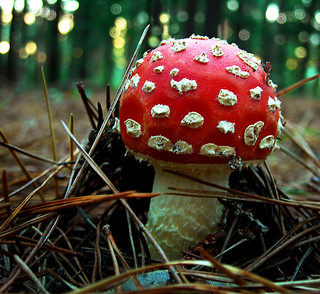 Young spotty shroom