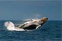 Ecuador-whale-watching