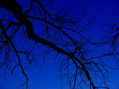 Black Lightning (eschn3am) Tags: blue trees sky italy black color nature gardens digital canon florence europe italia branches firenze s400 uc boboli 5photosaday mywinners abigfave platinumphoto anawesomeshot aplusphoto