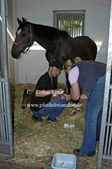 lz250505(168) (Lothar Lenz) Tags: horse caballo cheval bein cavalo pferd hest equus paard klinik tierarzt hst fohlen verletzung hestur konj hobu zirgs lotharlenz