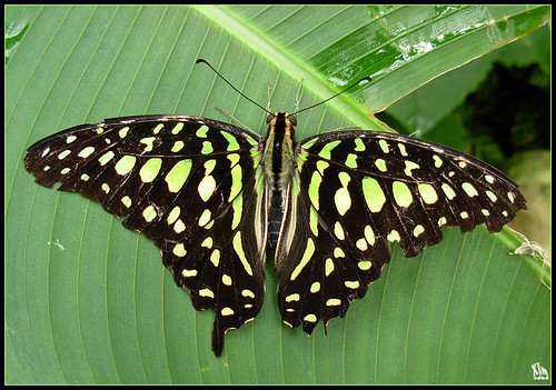 Edinburgh Butterfly Farm