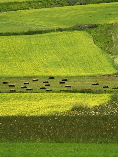 http://farm4.static.flickr.com/3083/2682227098_1d2f6c42a6.jpg