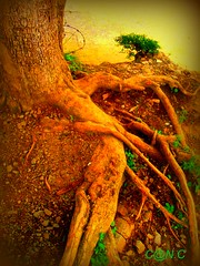 Linkage... (d gypsy!) Tags: trees green earth roots blend