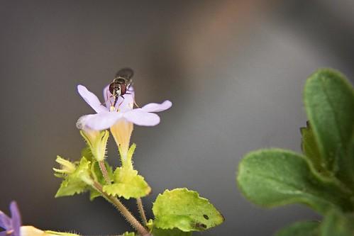 Weird Little Bug