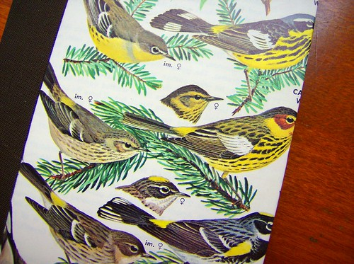Golden Throated Warblers - Detail