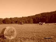 Ploughin' (Blackmuse) Tags: estate campagna seppia campi