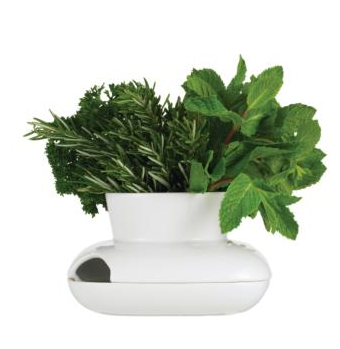 dwr- herb pot